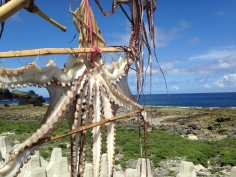 Fresh-caught octopus being hung to dry by local fishermen.
